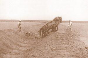 Horseteam Digging in Ditch
